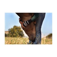 She's Country ❤ liked on Polyvore featuring pictures, animals, country, people, photos and backgrounds