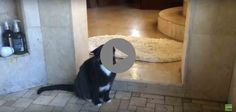 Other Cat Shakes His Head. Lol