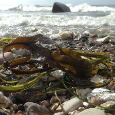 tang sten og bølger