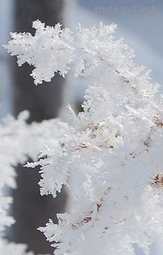 Instricate design of beautiful snow crystals!