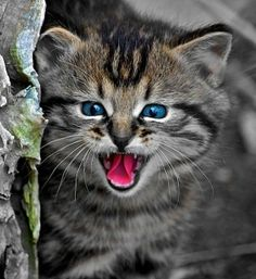 African Wild Cat | African Wild Cat kitten by Johan van Eeden, ... | Small, but Mighty W ...