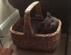 Blue in a basket