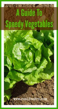 Speedy Vegetables Guide