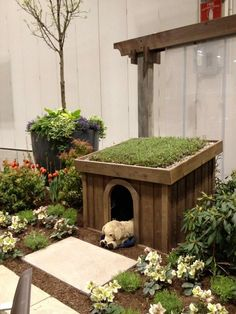 doghouse with a living roof  Niki Jabbour - The Year Round Veggie Gardener