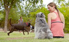 Socialization - Does your dog have trouble interacting with other dogs and people? Click through for training tips! Petsmart Dog Training, Socializing Dogs, Puppy Socialization, Dog Behavior, Training Tips, Your Life, You Changed, Best Dogs, Your Dog