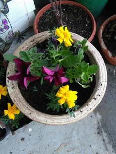 Starting to replant my flowers into pots, beautiful colours
