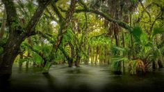 Myakka River State Park, Florida - Paul Marcellini/Tandem Stills + Motion