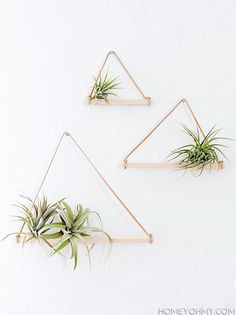 Build this lovely little air plant hanger | DunnDIY.com |