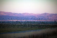 Thousand Birds on Purple Mountain | Flickr - Photo Sharing!