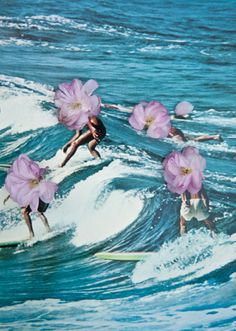 Jess wants to go surfing in Hawaii