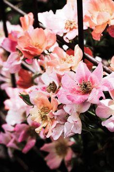 Photo Diary: Portland in Bloom