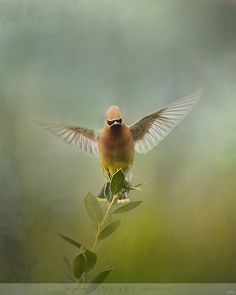 The Waxwing Welcomes Spring