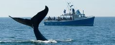 101 Maine Things To Do - Whale Watching!!!