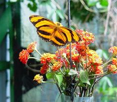 Love Butterflies? Visit Butterfly Farm CostaRica