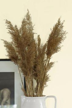 Fargen er hentet fra naturens bleke og sarte strå. En nostalgisk og vakker hvit nyanse. #hvit#natur#nostalgisk#blek#strå#straw#mugge#detaljer#inspirasjon#inspiration#maling#painting#farge#stue#livingroom#soverom#bedroom#gang#hall#fargekart#Fargerike Ikea, Plants, Ikea Co, Plant, Planets