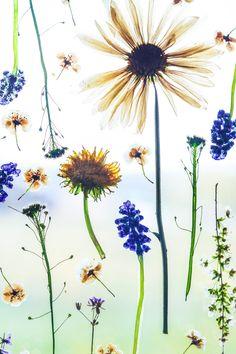 Press flowers, easy crafts, cute crafts, diy crafts for kids, hobbies and c Flower Crafts, Diy Flowers, Press Flowers, Drying Flowers, Bouquet Flowers, Flower Diy, Flower Ideas, Wedding Flowers, Cute Crafts