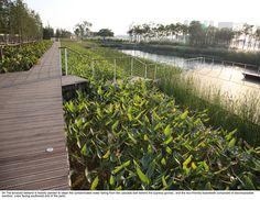 20-turenscape-houtan-park « Landscape Architecture Works | Landezine Landscape Architecture Works | Landezine