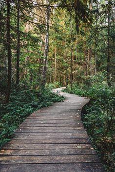 Forest Path - Free Photo under Creative Commons Zero (CC0) license