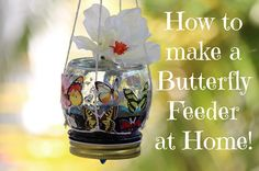 Kids Craft Adorable Butterfly Feeder !