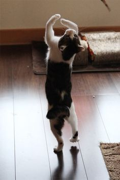 We'd give this guy a 10 for form! There's nothing like a cat dance!