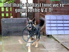 :) GSD Everything you want to know about GSDs. Health and beauty recommendations. Funny videos and more