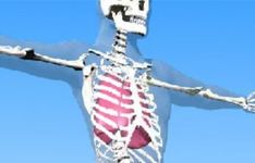 Learn about bones and organs of the human body. Put bones and organs into their correct position using the interactive body builder. Find out about the human body structure. Skeletal System, Circulatory System, Science Resources, Interactive Activities, Science For Kids, Life Science, Bones And Muscles, Bone And Joint, Medical Field