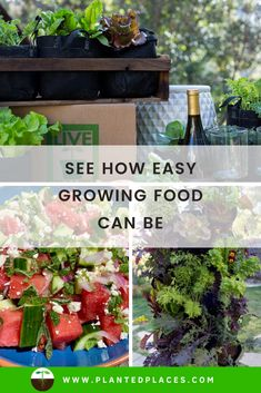 Imagine growing your own greens at home and harvesting just what you need. You can do that with Planted Places vertical gardening kit or container gardening kit. Organic Soil, Organic Gardening, Vegetable Gardening, Feng Shui Plants, Types Of Herbs, Kinds Of Vegetables, Plant Health, Grow Your Own Food, Growing Herbs