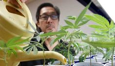 La marihuana podría curar el Alzheimer