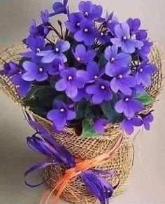 Beautiful Flower Arrangements, Pretty Flowers, Purple Flowers, Flower Petals, My Flower, Botanical Flowers, Flower Backgrounds, Flower Pictures, Beautiful Roses