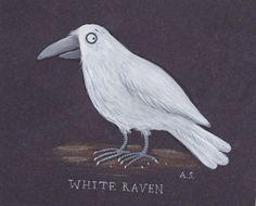 Ein wunderschöner weißer Rabe von Axel Scheffler. Danke! Axel Scheffler, White Raven, Rabe, Childrens Books, Owl, Bird, Illustration, Animals, Nice Asses