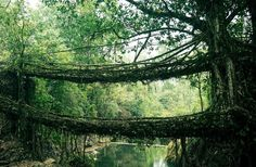 It's sustainable living architecture that will grow and live for generations. One of the few examples of the world where humans found a natural solutions, a way of working with nature to overcome the problems a wild river can cause. Bio-engineering at it's best using nature's resources without upsetting its balance.