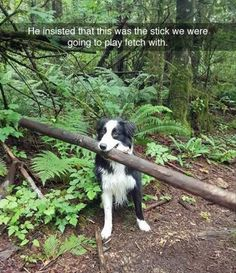 Funny Animal Pictures Of The Day - 24 Images