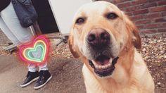 thats my dog hihi  #cutie #pets #doglover #goodboy