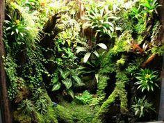 Gecko Terrarium, Aquarium Terrarium, Reptile Terrarium, Succulent Terrarium, Planted Aquarium, Reptile Room, Reptile Cage, Reptile Enclosure, Reptile Habitat