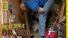 Dr. Pol Rescues a Kitten | The Incredible Dr. Pol