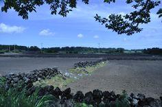 제주의 밭...구좌읍세화리 비자림가는 도로변..20130715