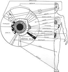 Iridologia - Projeção dos orgãos na íris