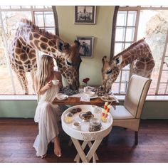 Giraffe Manor, Kenya - This charming hotel in the Lang'ata suburb of Nairobi is home to a breeding program for endangered Rothschild giraffes. While there, you'll probably experience the gentle giants poking their heads through the windows of your guest suite or the breakfast room. Make sure to pause at the veranda to feed the giraffes or take a guided walk through the wildlife-filled forest.