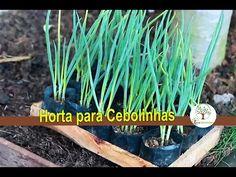 Horta em casa como plantar cebolinha - YouTube