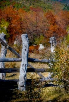 Autumn - reminds me of home in the Colorado Rockies ~♥~