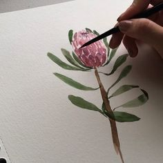 """Jelowish on Instagram: """"Process video on how i draw the Protea flower #watercolorvideo"""" Flor Protea, Protea Flower, Flowers, Watercolor Paintings For Beginners, Watercolor Video, Watercolor Art, Watercolor Bookmarks, King Art, Image Editing"""