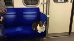 This cat is a total boss at navigating Tokyo's subway http://ift.tt/1UYhKdE  Who run the world? Cats.  An unnamed kitty has taken over Tokyos subway mainly the downtown train Seibu Ikebukuro line which services stations between Ikebukuro and Seibu Chichibu.  SEE ALSO: Tokyo now has a hedgehog cafe and we want to hang out there forever  According to several passengers the cat is frequently spotted making itself comfortable on the train seats without a human accompanying it.  Proving that its…