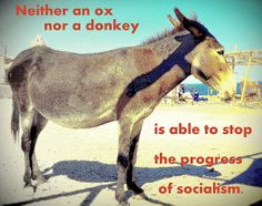 Neither An Ox Nor A Donkey