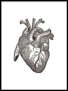 Gammel illustration af hjertets anatomi