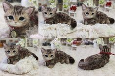 Adorable needle felted cat by Cherisa from Japan.