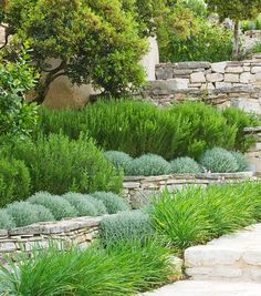 THE ROU ESTATE, CORFU: TIERED STONE TERRACE WITH PROSTRATE ROSEMARY AND CLIPPED SANTOLINA - RAISED BEDS