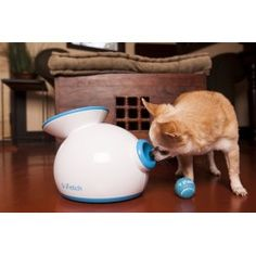 iFetch lanzador de pelotas automático para perros!!