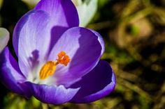spring time by knud erik simonsen