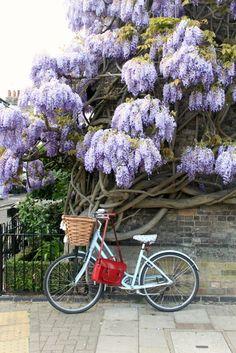 Wisteria-Bicycles-Cambridge-Satchel in Cambridge UK