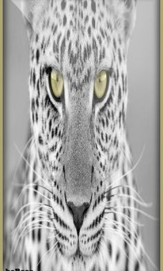 Fondo leopard 360 hc para celular